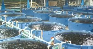 fish-farming2